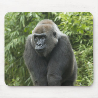 Foto del gorila tapetes de ratón