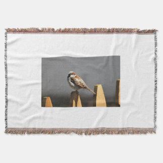Foto del gorrión manta