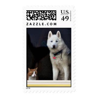 Foto del husky siberiano sellos