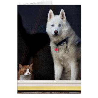 Foto del husky siberiano tarjeta de felicitación