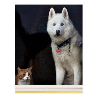 Foto del husky siberiano postal