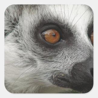 Foto del Lemur Pegatina Cuadrada