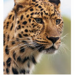 Foto del leopardo esculturas fotograficas