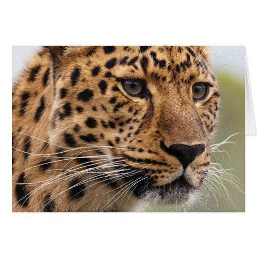 Foto del leopardo felicitacion