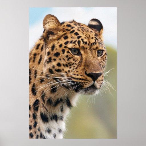 Foto del leopardo impresiones