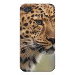 Foto del leopardo iPhone 4/4S fundas