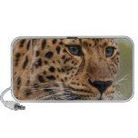 Foto del leopardo mini altavoces