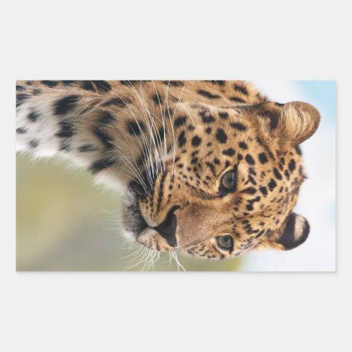 Foto del leopardo pegatina rectangular