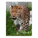 Foto del leopardo postal