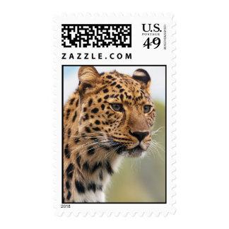Foto del leopardo sellos