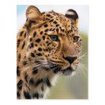 Foto del leopardo tarjeta postal