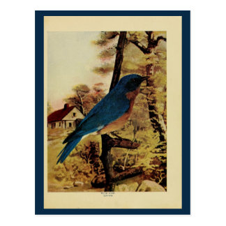 Foto del litho del color del bluebird del vintage postal