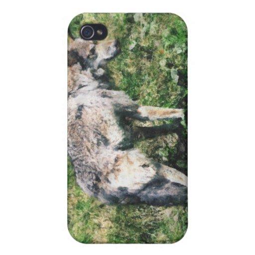 Foto del lobo gris y colección de arte iPhone 4/4S carcasa