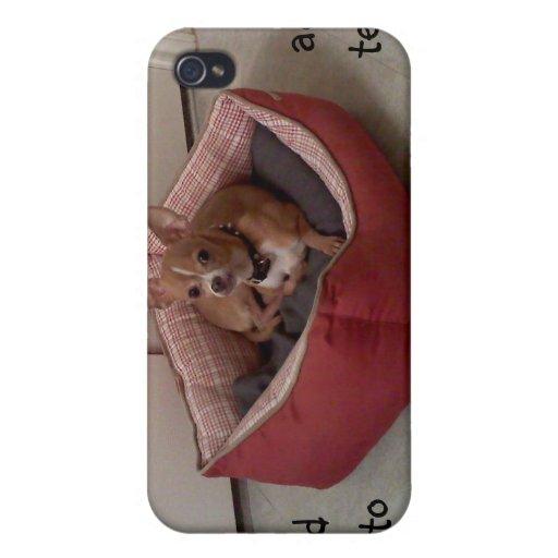 Foto del mascota de Chihuaha, caso de Shell duro p iPhone 4/4S Fundas