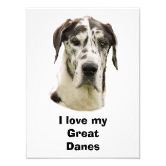 Foto del mascota de Halequin great dane