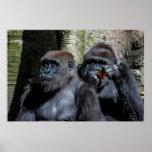 Foto del mono del gorila poster