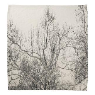 Foto del paisaje de la nieve del invierno del bandana