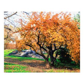 Foto del paisaje del árbol del Central Park Cojinete