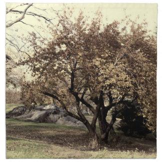 Foto del paisaje del Central Park Servilleta De Papel
