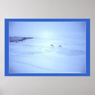Foto del paisaje del invierno de los gansos de Can Impresiones
