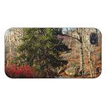 Foto del paisaje del otoño del Central Park iPhone 4 Coberturas