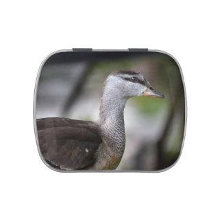 foto del pájaro del lado izquierdo del pato latas de dulces