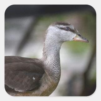 foto del pájaro del lado izquierdo del pato colcomanias cuadradass