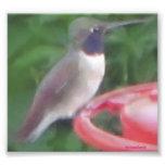 Foto del pájaro del tarareo del pixel