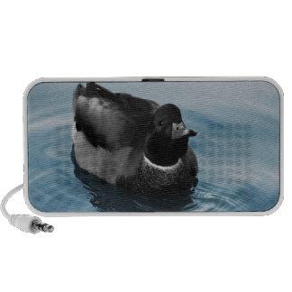 Foto del pato del pato silvestre iPod altavoz