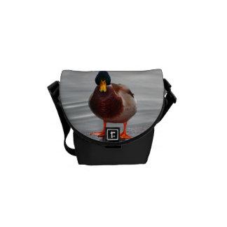 Foto del pato del pato silvestre bolsa de mensajeria