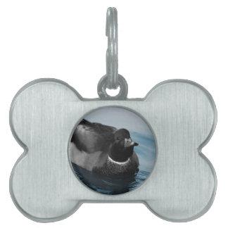 Foto del pato del pato silvestre placa mascota