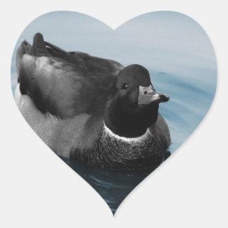 Foto del pato del pato silvestre pegatina de corazón