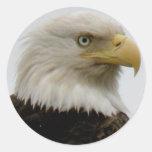 Foto del perfil de Eagle calvo en la isla de Unala Pegatina