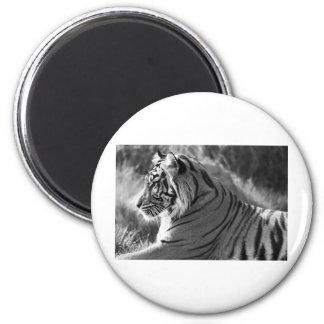 Foto del perfil del tigre de B&W Imán Redondo 5 Cm
