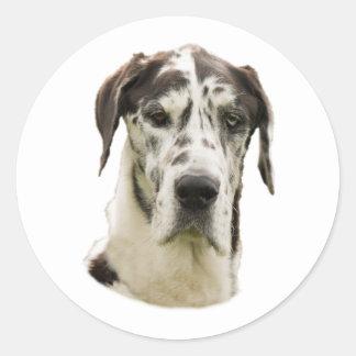 Foto del perro de great dane del Harlequin Pegatina Redonda