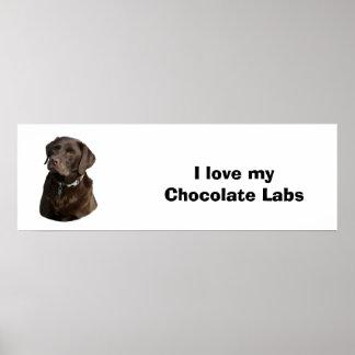 Foto del perro de Labrador del chocolate Posters