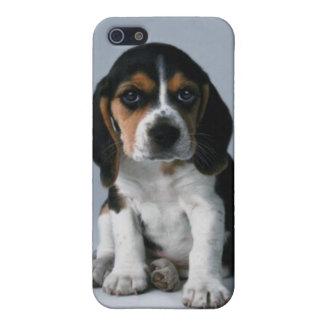 Foto del perro de perrito del beagle iPhone 5 fundas