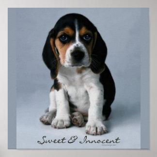 Foto del perro de perrito del beagle póster