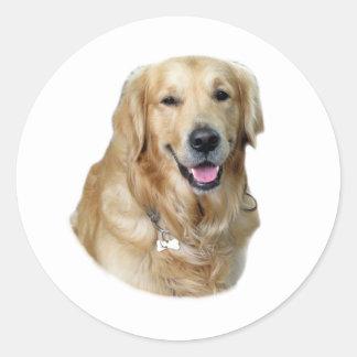 Foto del perro del golden retriever pegatina
