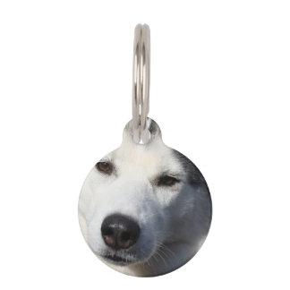 Foto del perro del husky siberiano placas de mascota