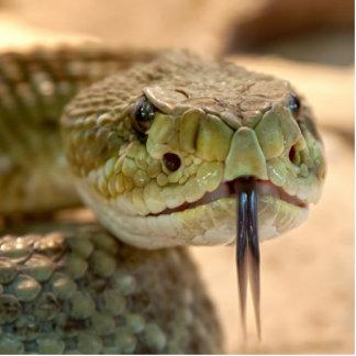 Foto del primer de la serpiente de cascabel fotoescultura vertical