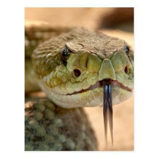 Foto del primer de la serpiente de cascabel tarjetas postales