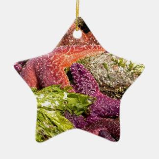 Foto del primer de las estrellas de mar ornamento para arbol de navidad