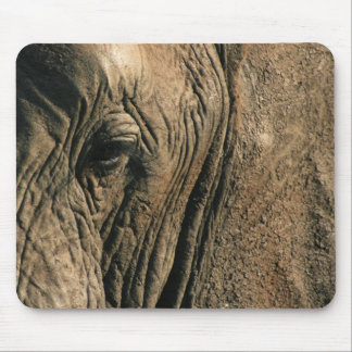 Foto del primer del ojo del elefante africano mousepads