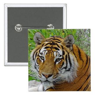 Foto del primer del tigre siberiano de la cara pin cuadrado
