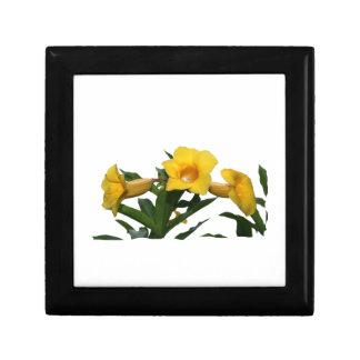 Foto del recorte de las flores de trompeta amarill cajas de regalo