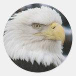 Foto del retrato de Eagle calvo Pegatinas Redondas