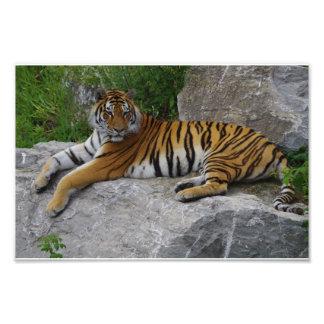 Foto del retrato de un tigre siberiano fotografías