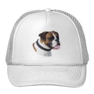 Foto del retrato del perro del boxeador gorras de camionero