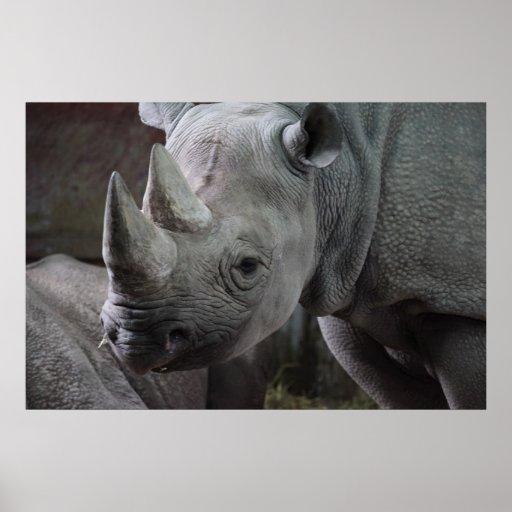 Foto del rinoceronte negro posters